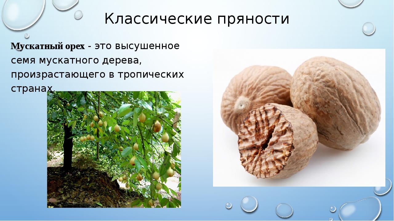 Классические пряности Мускатный орех - это высушенное семя мускатного дерева,...