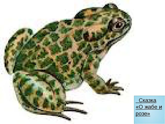 Сказка «О жабе и розе»