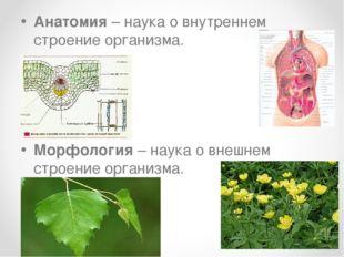 Анатомия – наука о внутреннем строение организма. Морфология – наука о внешне
