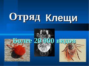 Клещи Отряд Более 20 000 видов