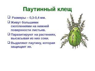 Паутинный клещ Размеры – 0,3-0,4 мм. Живут большими скоплениями на нижней пов