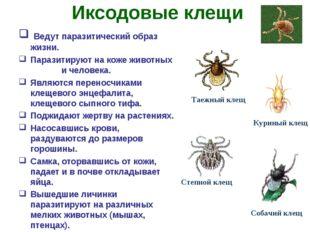 Иксодовые клещи Ведут паразитический образ жизни. Паразитируют на коже животн