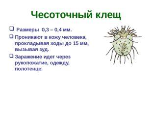Чесоточный клещ Размеры 0,3 – 0,4 мм. Проникают в кожу человека, прокладывая