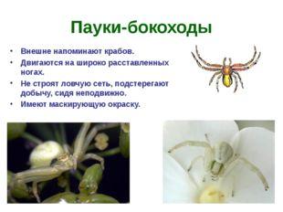 Пауки-бокоходы Внешне напоминают крабов. Двигаются на широко расставленных но