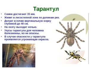 Тарантул Самки достигают 35 мм. Живет в лесостепной зоне по долинам рек. Дела