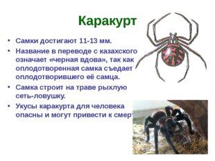 Каракурт Самки достигают 11-13 мм. Название в переводе с казахского означает