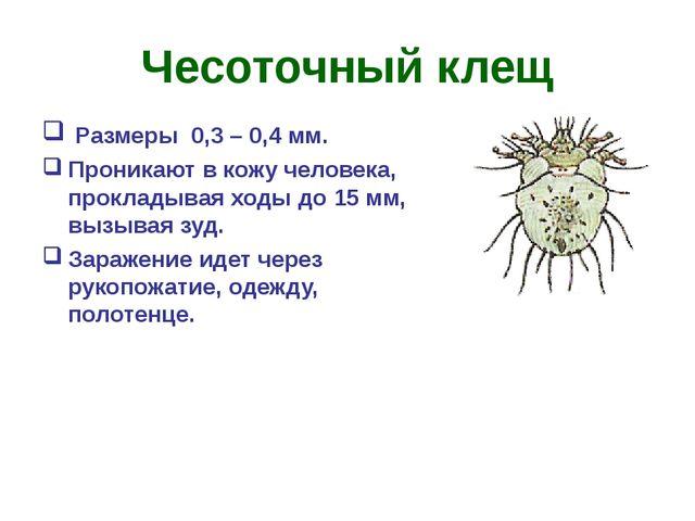 Чесоточный клещ Размеры 0,3 – 0,4 мм. Проникают в кожу человека, прокладывая...