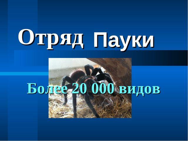 Пауки Отряд Более 20 000 видов