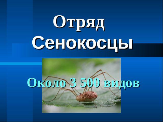 Сенокосцы Отряд Около 3 500 видов