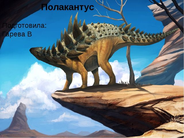 Полакантус Подготовила: Гарева В