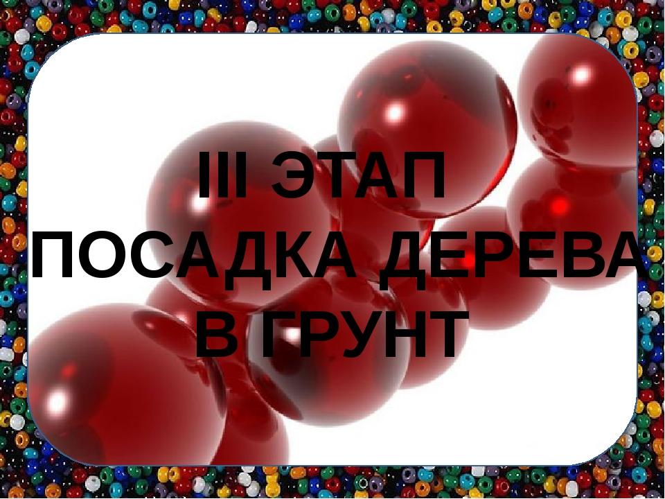III ЭТАП ПОСАДКА ДЕРЕВА В ГРУНТ