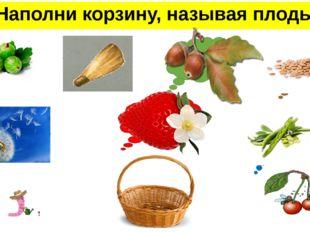 Наполни корзину, называя плоды ягода крылатка желудь семянка многокостянка зе