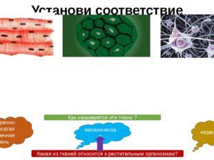 Установи соответствие Клетки имеют тело и многочисленные отростки разной длин