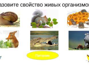Назовите свойство живых организмов? Питание Дай ему характеристику