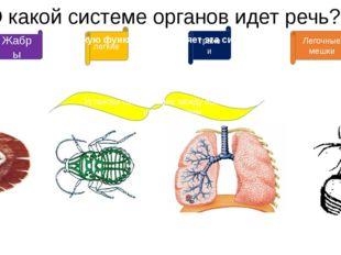 О какой системе органов идет речь? Жабры дыхательная Установи соответствие ме