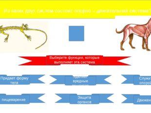 Из каких двух систем состоит опорно – двигательная система? Выберите функции