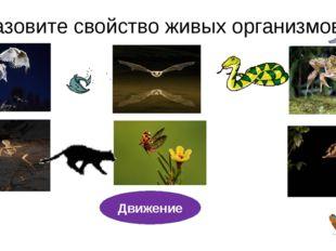 Назовите свойство живых организмов? Движение Дай ему характеристику