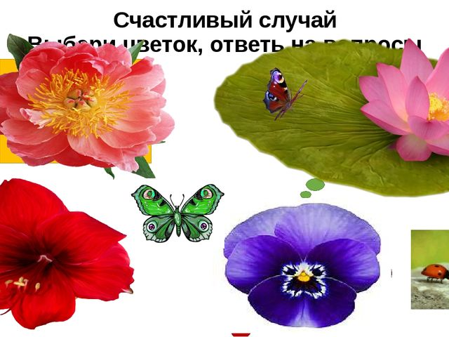 Счастливый случай Выбери цветок, ответь на вопросы Что общего в живой и нежив...
