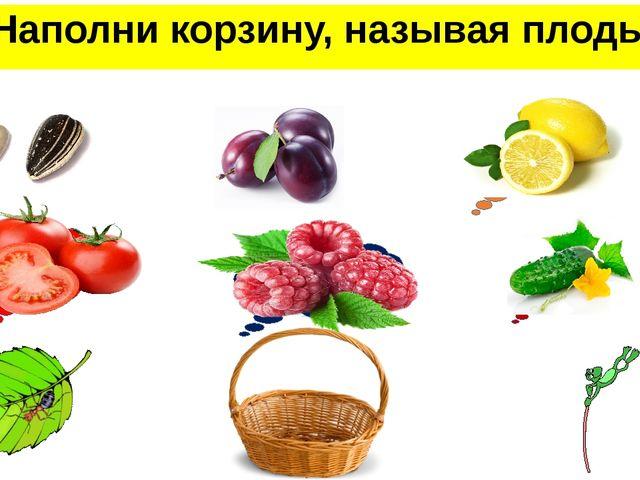 Наполни корзину, называя плоды семянка костянка померанец ягода многокостянка...