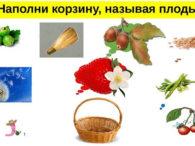 Наполни корзину, называя плоды ягода крылатка желудь семянка многокостянка зе...