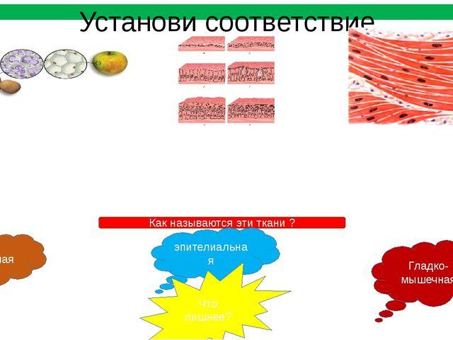 Установи соответствие Выстилает полости внутренних органов. Защищает от высых...