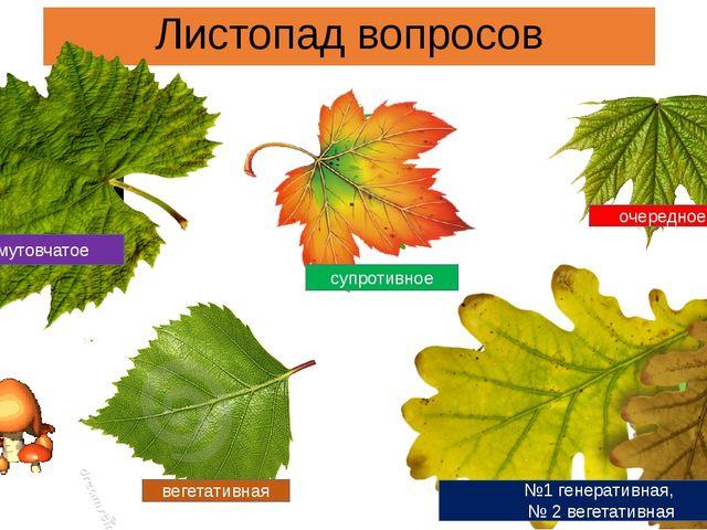 Листопад вопросов мутовчатое супротивное очередное вегетативная №1 генеративн...