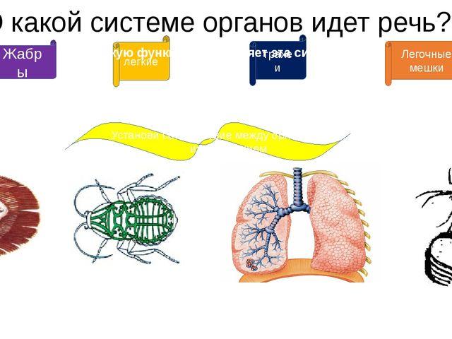 О какой системе органов идет речь? Жабры дыхательная Установи соответствие ме...