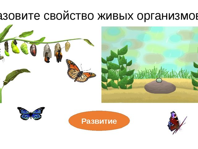 Развитие Назовите свойство живых организмов? Дай ему характеристику