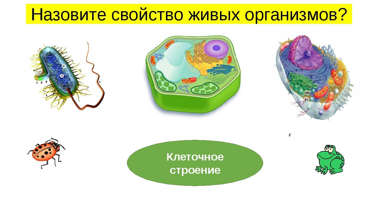 Назовите свойство живых организмов? Клеточное строение