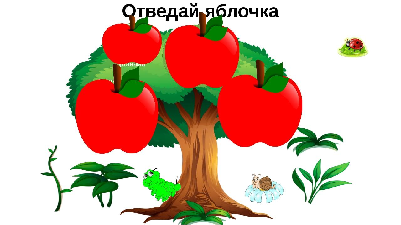 Отведай яблочка Цветки, плоды и семена называют…органами Поглощение клеткой к...