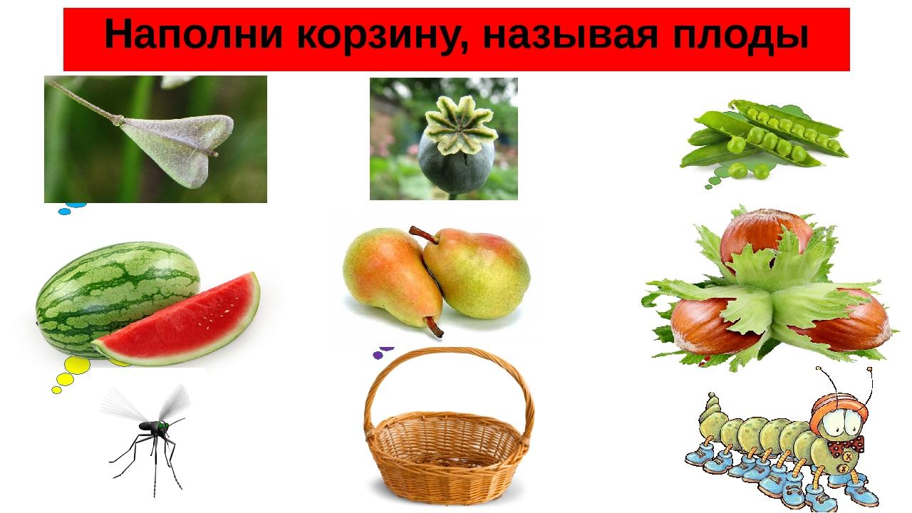 Наполни корзину, называя плоды стручочек коробочка боб яблоко орех тыквина