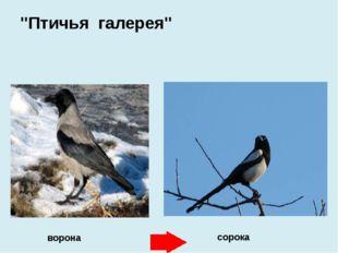 """ворона сорока """"Птичья галерея"""""""