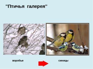 """воробьи синицы """"Птичья галерея"""""""