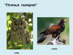 """сова сокол """"Птичья галерея"""""""