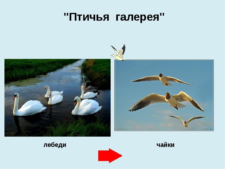 """лебеди чайки """"Птичья галерея"""""""