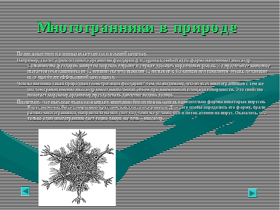 Многогранники в природе Правильные многогранники встречаются и в живой природ...