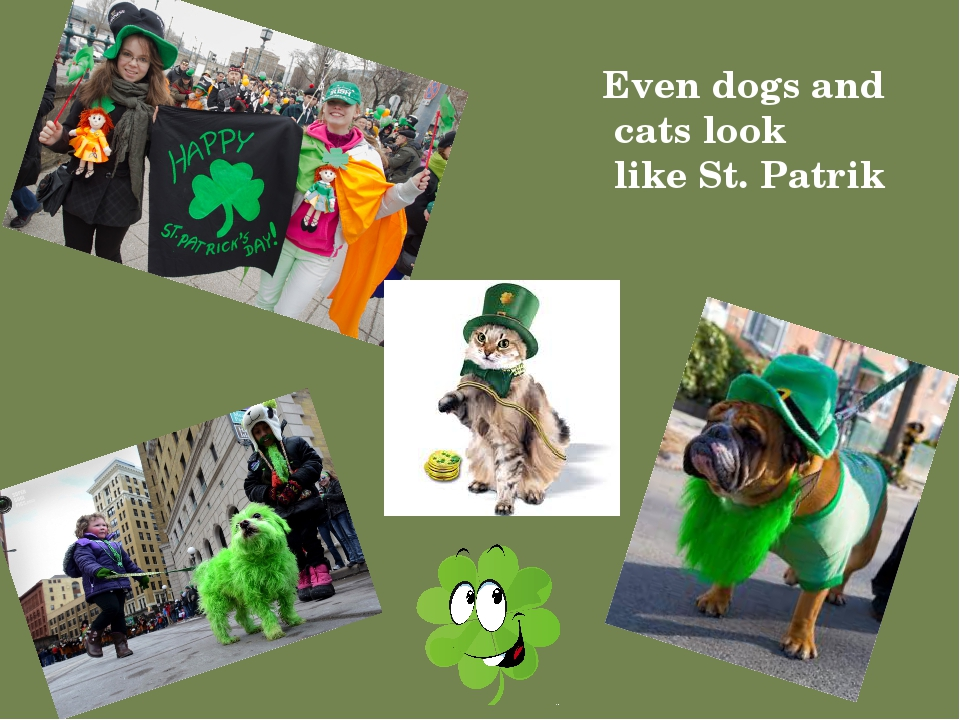 Even dogs and cats look like St. Patrik Надпись