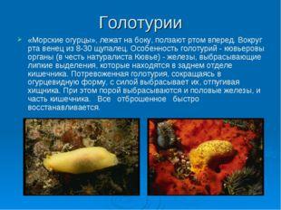 Голотурии «Морские огурцы», лежат на боку, ползают ртом вперед. Вокруг рта ве