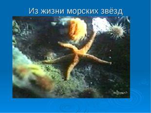 Из жизни морских звёзд