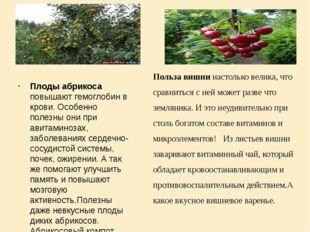 Плоды абрикоса повышают гемоглобин в крови. Особенно полезны они при авитами