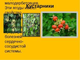 Кустарники Смородина черная и красная. Любимые ягоды малодербетовцев. Эти яго
