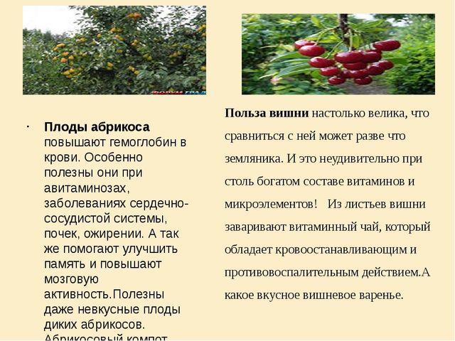 Плоды абрикоса повышают гемоглобин в крови. Особенно полезны они при авитами...