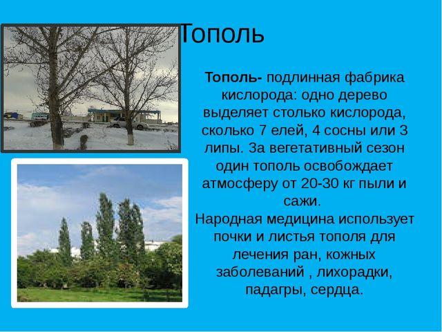 Тополь Тополь- подлинная фабрика кислорода: одно дерево выделяет столько кисл...