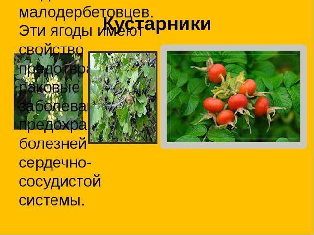 Кустарники Смородина черная и красная. Любимые ягоды малодербетовцев. Эти яго...
