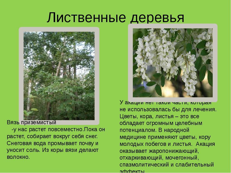 Лиственные деревья У акации нет такой части, которая не использовалась бы для...