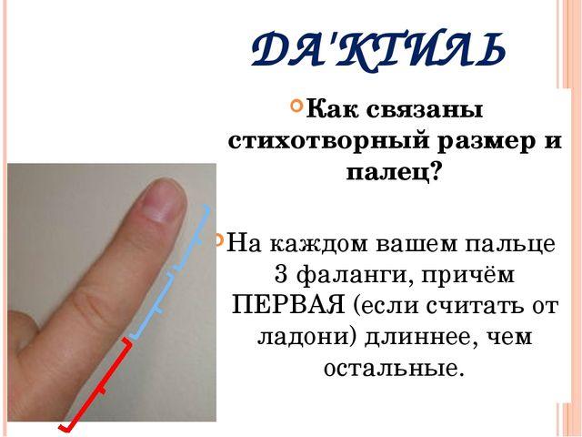 ДА'КТИЛЬ Как связаны стихотворный размер и палец? На каждом вашем пальце 3 ф...
