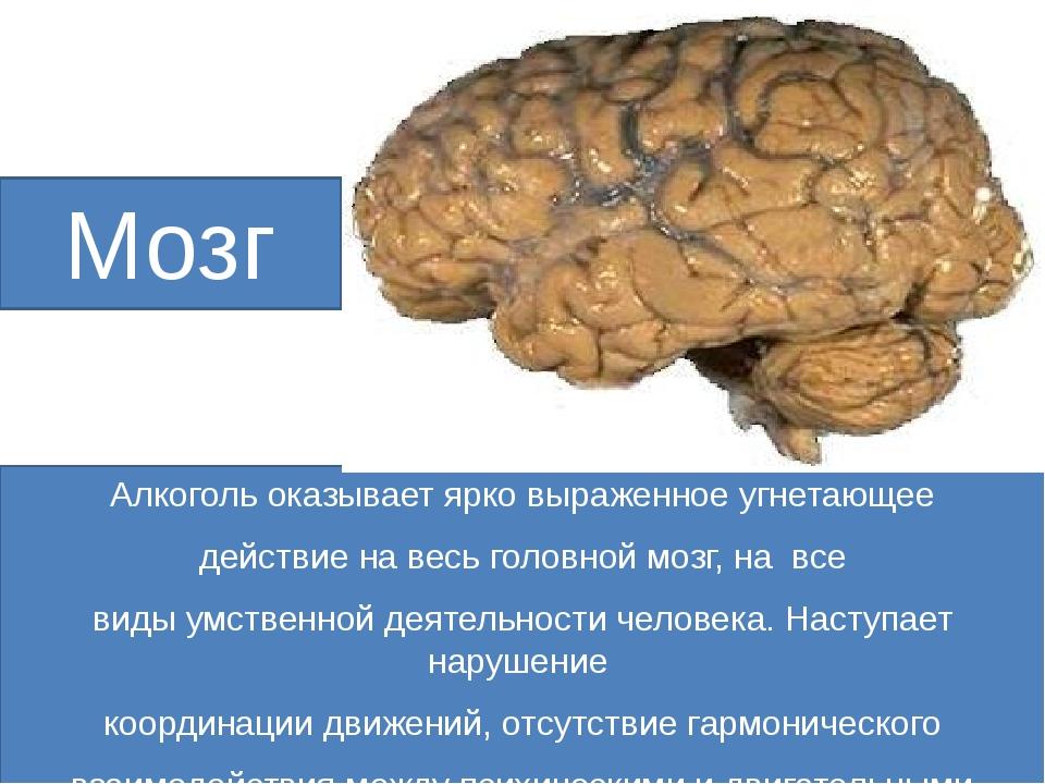 Мозг Алкоголь оказывает ярко выраженное угнетающее действие на весь головной...