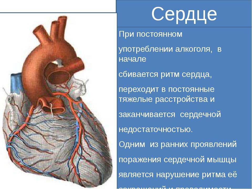 Сердце При постоянном употреблении алкоголя, в начале сбивается ритм сердца,...