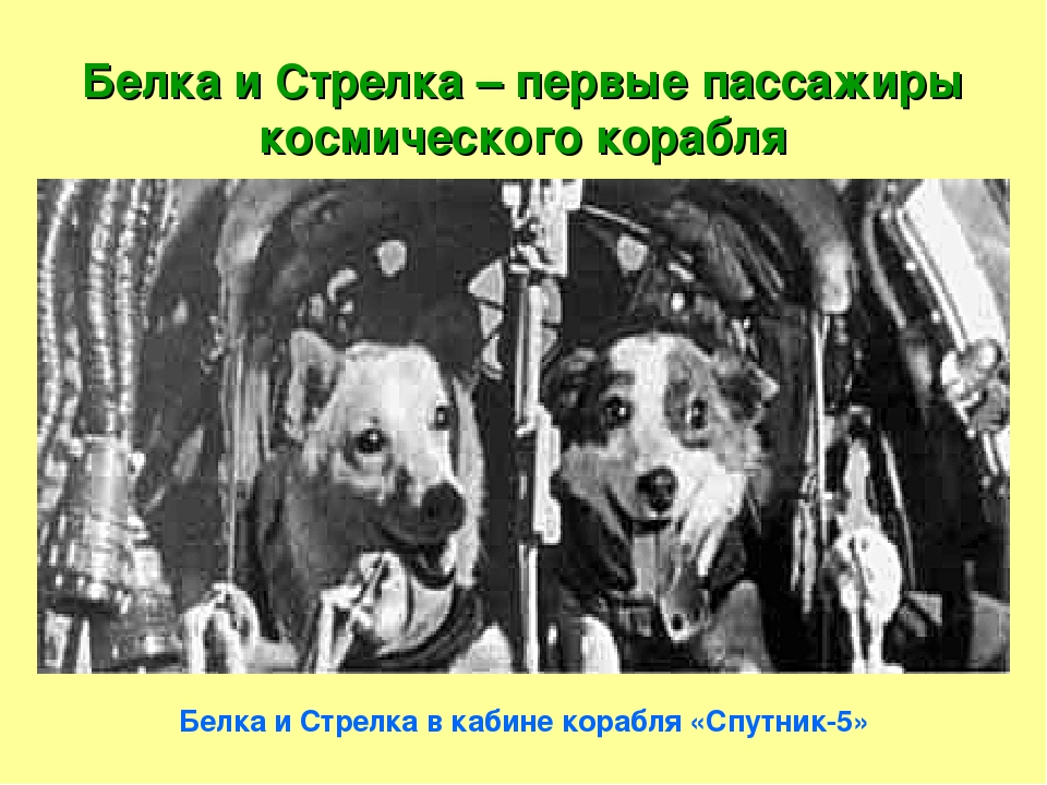 Белка и Стрелка – первые пассажиры космического корабля Белка и Стрелка в каб...
