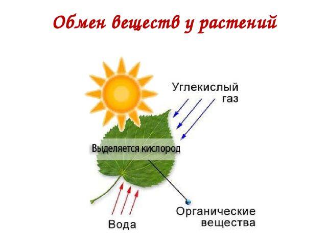 Обмен веществ у растений